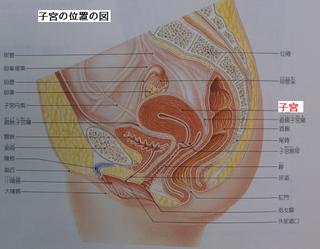 子宮の位置の図.png