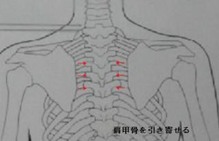 肩甲骨1.png