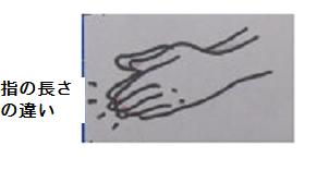 長さ指の.png