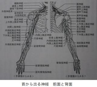前後首 神経 .jpg