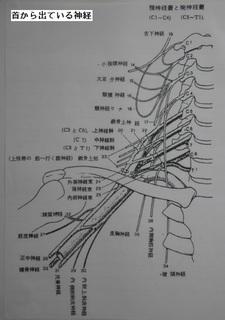 神経首の.jpg
