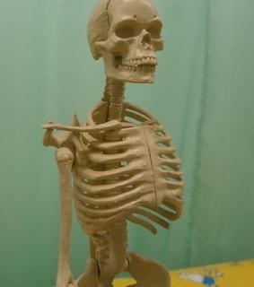 肋骨6.jpg