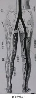 血管足の.jpg
